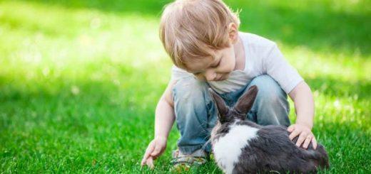 felelős állattartás